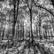 The Monochrome Forest Art Print
