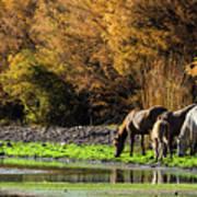 The Salt River Wild Horses  Art Print