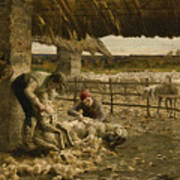 The Sheepshearing Art Print