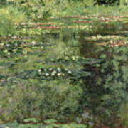 The Water-lilies Pond  Art Print