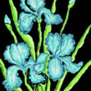 Three  Blue Irises Art Print