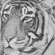 Tigar Art Print