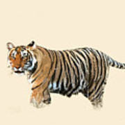 Tiger In The Long Grass Art Print