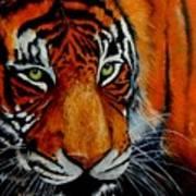 Tiger, Tiger Burning Bright... Art Print