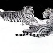Tigers In The Snow Art Print