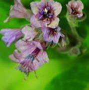 Tiny Purple Flower Art Print