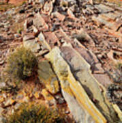 Tracks Of Color In Valley Of Fire Art Print