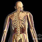 Transparent View Of Human Body Showing Art Print