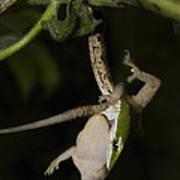Tree Snake Eating Gecko Art Print