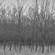 Trees In A Row Art Print