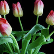 Tulip Bouquet Art Print by Tracy Hall
