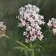 Valerian Art Print