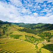 Vietnam Rice Terraces Art Print