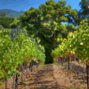 Vineyard Sauvignon Blanc Grapes Art Print