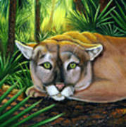 Watching  Florida Panther Art Print