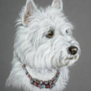 West Highland White Terrier  Art Print by Patricia Ivy