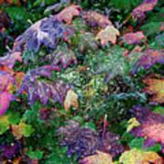 Wet Washington Autumn Fantasy 1 Art Print