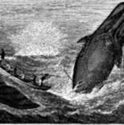 Whaling, 19th Century Art Print by Granger