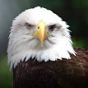Where Eagles Dare 4 Art Print
