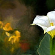 Awakening Flower Art Print