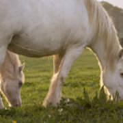 White Horses Art Print