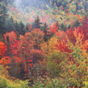 White Mountain Foliage Art Print