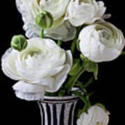 White Ranunculus In Black And White Vase Art Print by Garry Gay