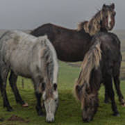 Wild Ponies On The Preseli Mountains Pembrokeshire Art Print