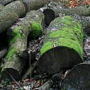 Winter Log Mossy Patterns Art Print