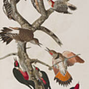 Woodpeckers Art Print