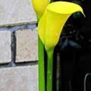 yellow Lily. Art Print