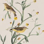 Yellow Red-poll Warbler Art Print