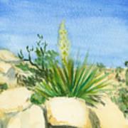 Yucca Tree Art Print