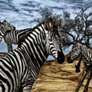 Zebra Outback  Art Print