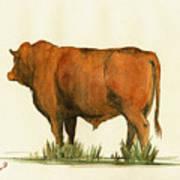 Zebu Cattle Art Painting Art Print