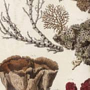 Aquatic Animals - Seafood - Algae - Seaplants - Coral Art Print