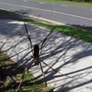 Australia - The Spider Art Print