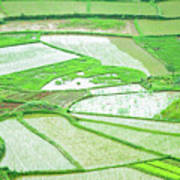 Rice Fields Scenery Art Print