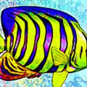 Underwater. Fish. Art Print