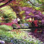 Water Lily Lake Art Print