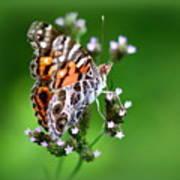 1074- Butterfly Art Print