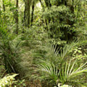 Jungle 31 Art Print