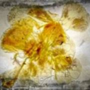 11265 Flower Abstract Series 02 #18 - Carnation 2 Art Print