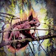 11452 Red Squirrel Sketch Square Art Print