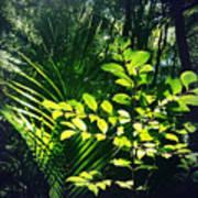 Jungle 123 Art Print