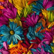 Daisy Petals Abstracts Art Print
