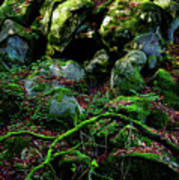 Fontainebleau Forest Art Print