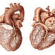 Heart, Anatomical Illustration, 1814 Art Print