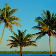 13- Palms In Paradise Art Print