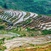 Longji Terraced Fields Scenery Art Print